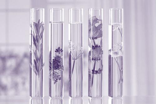 aromatherapie_violet