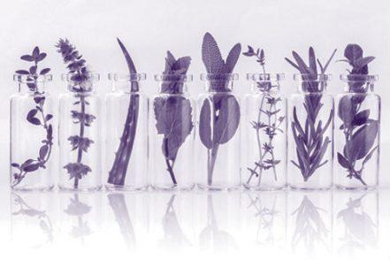 phytotherapie_violet