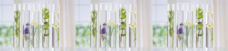 Aromathérapie - Claire Orseau - Anti-Aging, Naturopathie, Micronutrition,  Phytothérapie, Aromathérapie, N.A.E.T, Bilans Biologiques